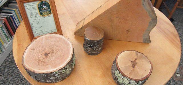 Tree Cookies illustrate Tamworth's history