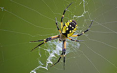 Spectacular spiders!