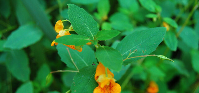 Landscaping with Native Plants, May 5 at 7 PM on Zoom