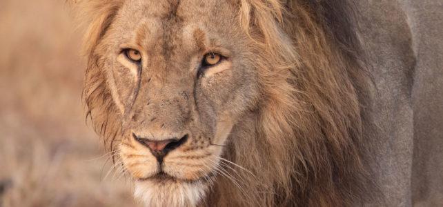 Highlights of a Photo Safari in Zambia
