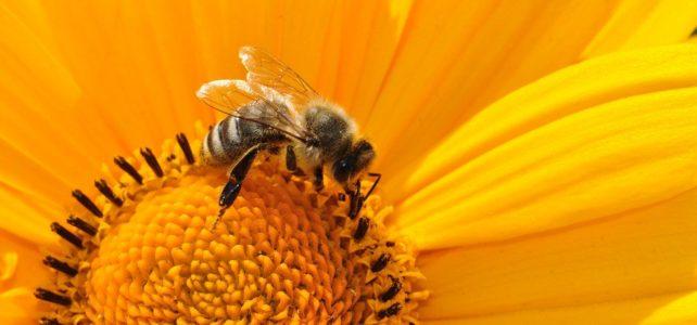 CLC hosts Zoom talk on pollinators 4/28