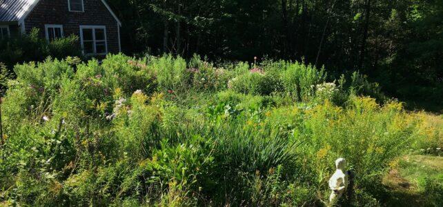 Backyard Habitat for Wild Neighbors, CLC Zoom May 19