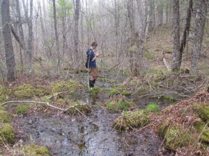 Vernal Pool photo by Lynne Flaccus